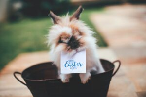 Het Gezinsleven - Gezinsactiviteiten - Creatief - Pasen 2021: Organiseer je eigen Paascompetitie! - Konijn houdt een kaartje vast met daarop Vrolijk Pasen